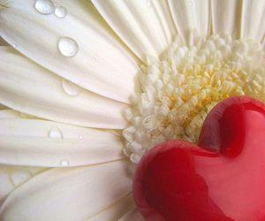 bravo, february, and flower image