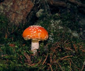 mushroom, romania, and floor image