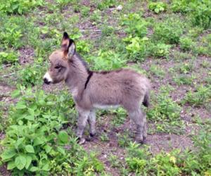 animal, burrito, and donkey image