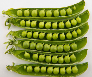 world peas and yummy noms image