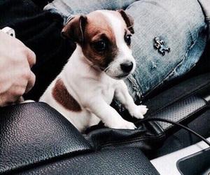 puppy cute image