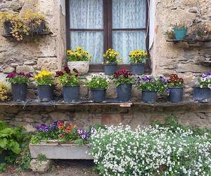 house flower spring image
