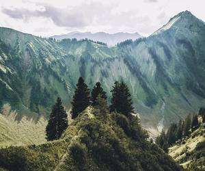 travel, forest, and adventure image
