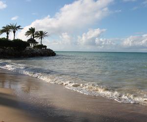 beach, ocean, and tropical image