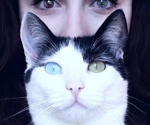 blue eyes, brown eyes, and cat image