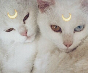cat, moon, and animal image