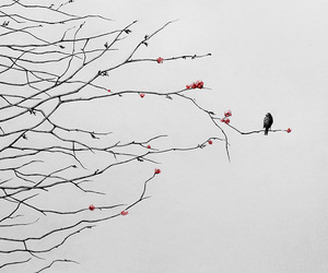 bird, art, and wall image