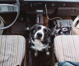 alternative, car, and dog image