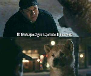 frases, dog, and hachiko image