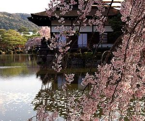 asia, flowers, and japan image