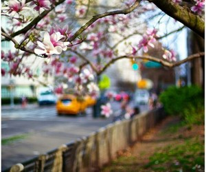 flowers, spring, and new york image