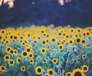 flowers, sunflower, and nature image