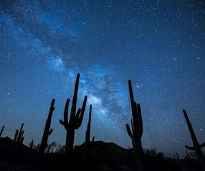 stars, cactus, and sky image