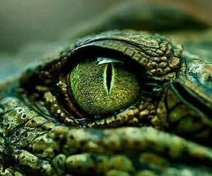 green, eye, and crocodile image
