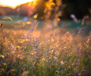 field, flowers, and light image