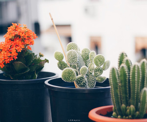 cactus, home, and light image
