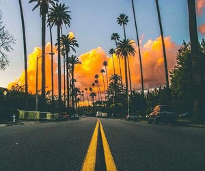 california, exotic, and palms image