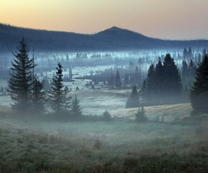 nature, fog, and forest image