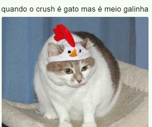 meme and memes br image