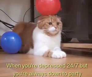cat and party image