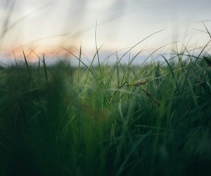 grass, nature, and summer image