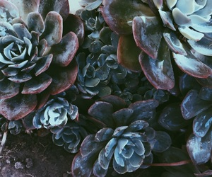 alternative, blue, and cactus image