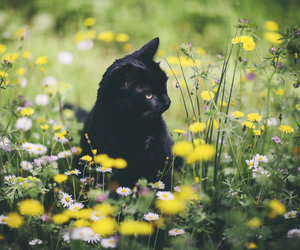 cat, flowers, and spring image