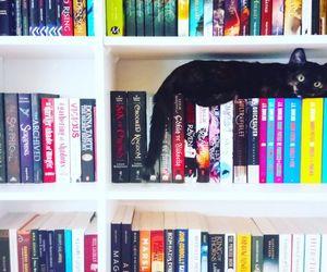 book, bookshelf, and cat image