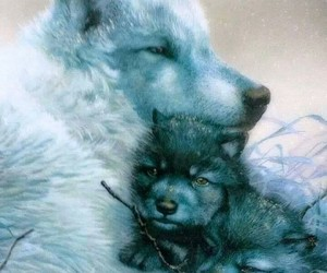 animals, wolves, and sweet image