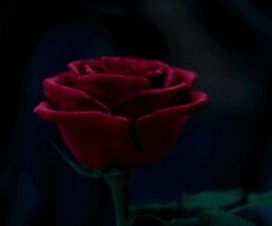 gif and beauty and the beast image