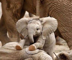 elephant, animal, and baby image