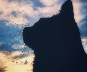 black, cat, and cloud image