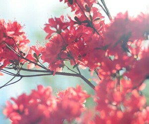 flowers, spring, and red image