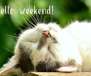 cat, relax, and weekend image