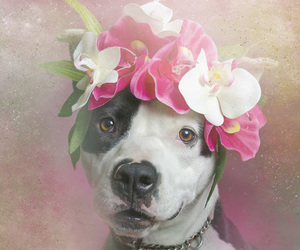 dog, flowers, and pitbull image