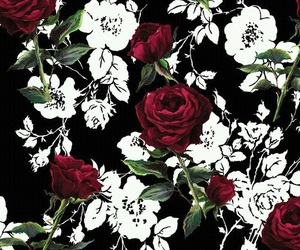 rose, background, and black image