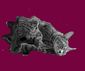 Animales, gato, and abstracto image