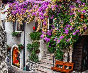 flowers, italy, and purple image