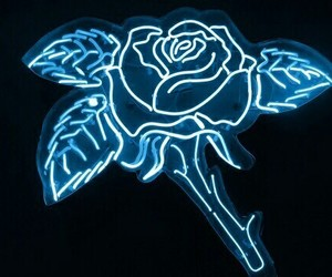 rose, blue, and neon image