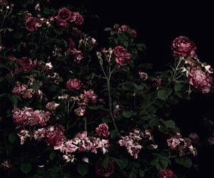 dark, flowers, and rose image