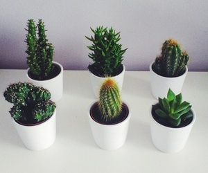 cactus, succulents, and cute image