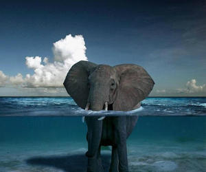 Animales, elephant, and animals image