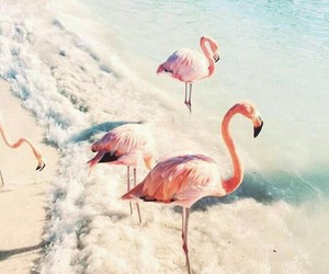 flamingo, pink, and beach image