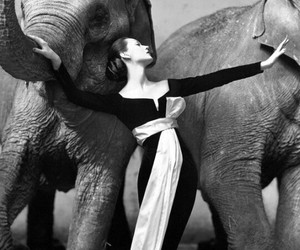 elephants, fashion, and div a image