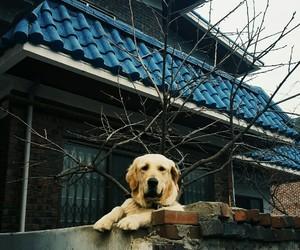 asia, big, and dog image