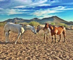 caballos and rancho image