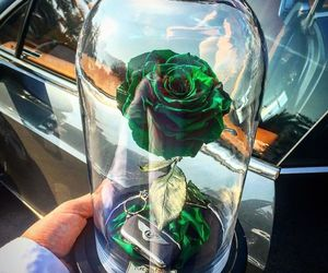 beauty and the beast, gifts, and rose image