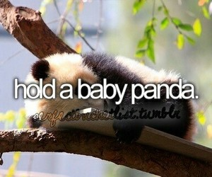 panda, bucket list, and animal image