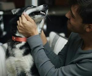 blue eyes, husky, and jacob image