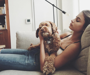 taylor hill, dog, and puppy image